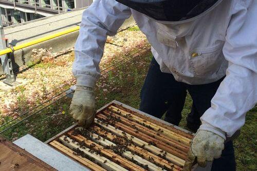Wolu1200 : Ils ont des abeilles sur leur toit