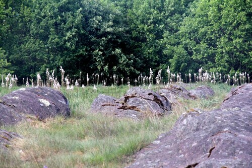 Forêt de brocéliande : Val sans retour et landes de Gurwan