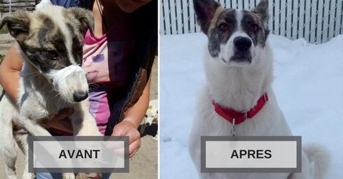 (-*♥*-) Après avoir frôlé la mort en Roumanie, ce chien a eu droit à une nouvelle vie à l'autre bout du monde