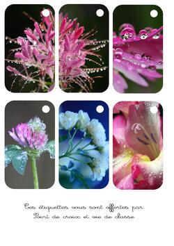 Cartonnettes fleurs et rosée