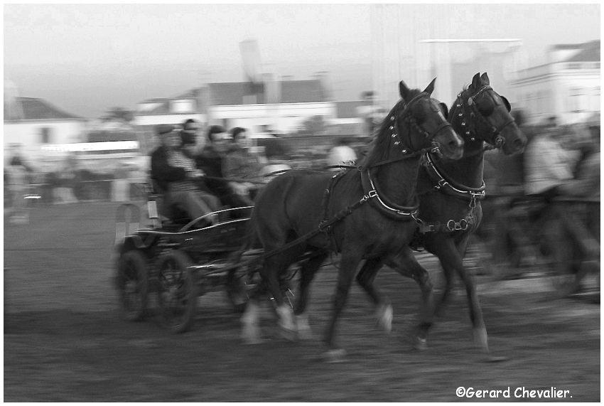 Feira nacional do cavalo - Golegã - Portugal #8