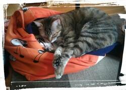 Le chat-sac ou le cat-bag ?