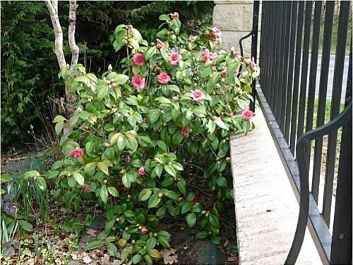 fleurs-mars-2011--2-.jpg