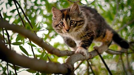 Un chat peut-il descendre tout seul d'un arbre ?