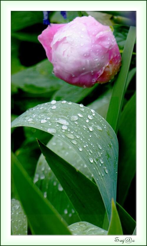journée du 6 Mai: pluie puis soleil
