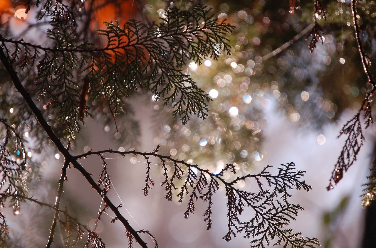 "thetwilightgarden:"" sparkly branches by Molly Deanhttp://www.mollydean.com"""