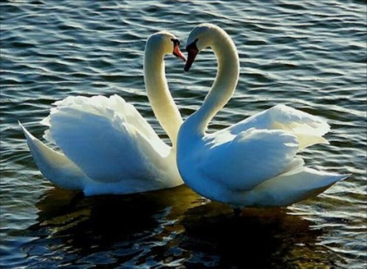 """Ballet """"Le Lac Des Cygnes"""" comme vous ne l'avez jamais vu avant ..."""