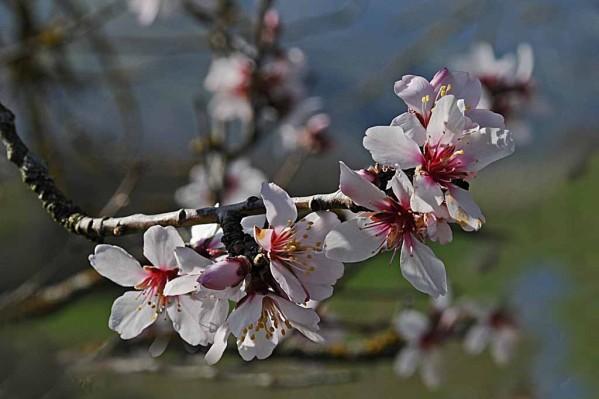 Fleurs-10 1375