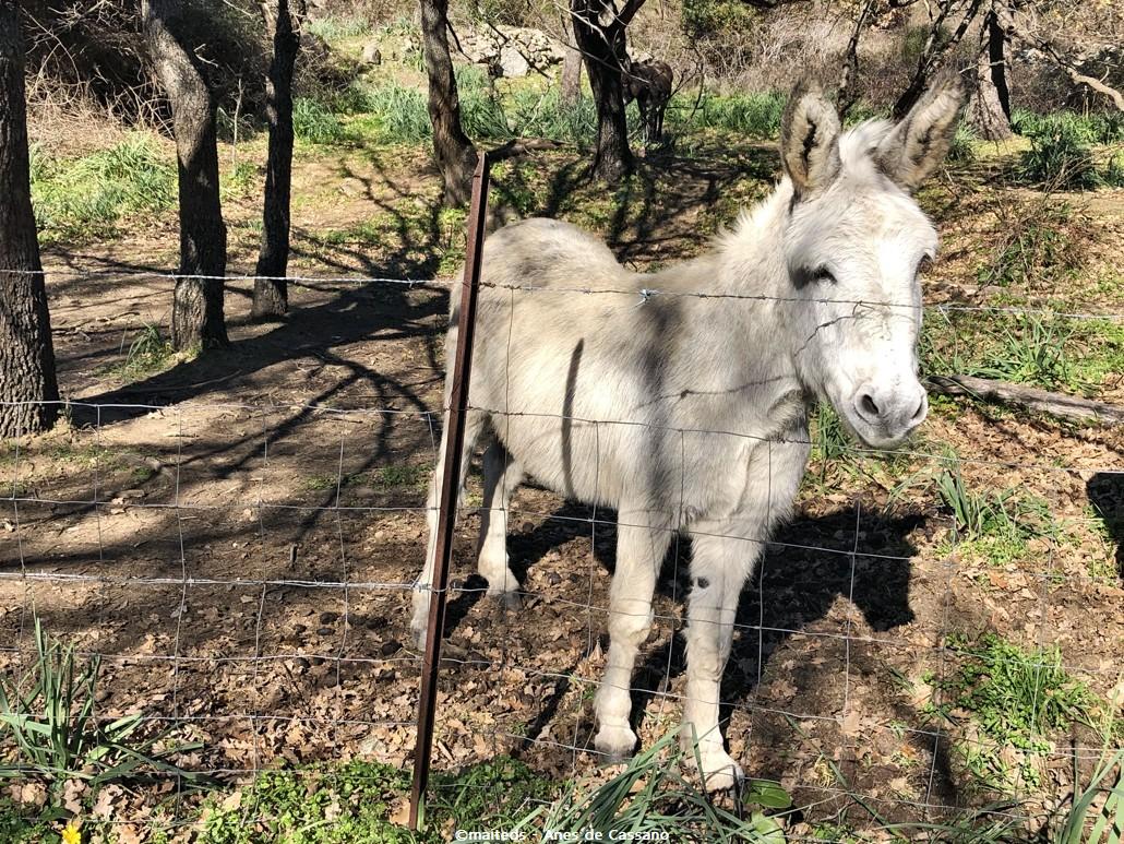 Les ânes de Cassano