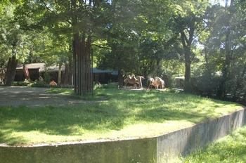 Zoo Duisburg 2012 620