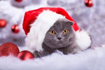Un chat ou un chien n'est pas un jouet de Noël