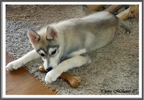 Keyko (4 mois)
