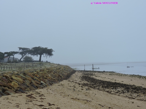 Noirmoutier : mes photos page 3
