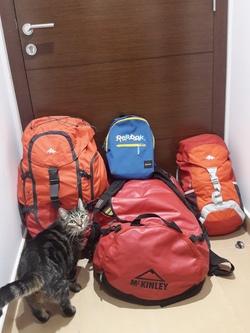 A l'intérieur de nos sacs de voyage ...