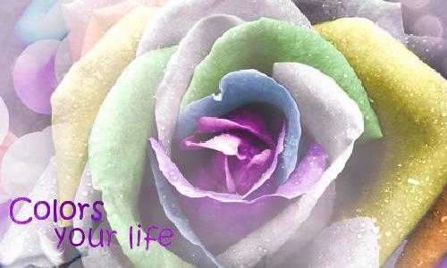 bannière flower