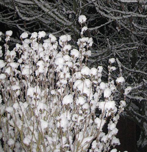 defi-neige--1-.jpg