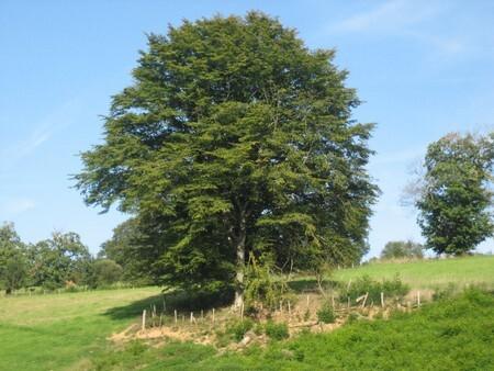 arbre_au_sommet