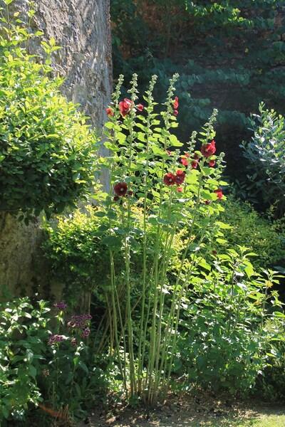 Le jardin du Vigneau
