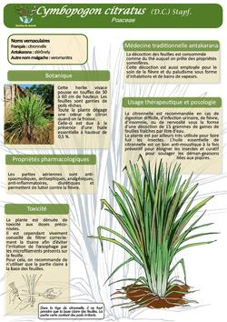 Plantes médicinales  avec Jardin du monde