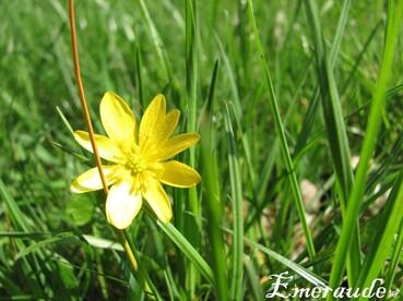 Photo Fleurs - 22.05.11 - 01