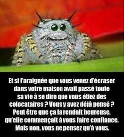 Les araignées mélomanes