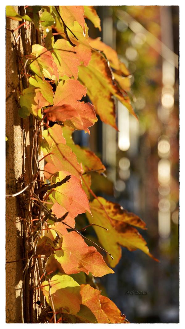 L'automne touche à sa fin