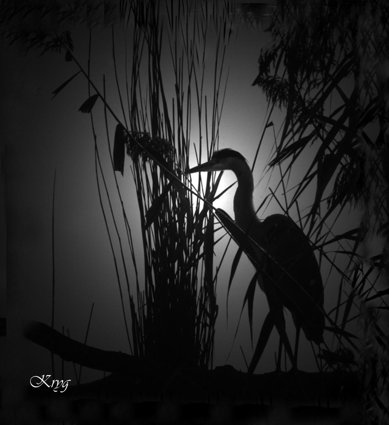 chasser heron bassin