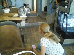 Un bar à chats