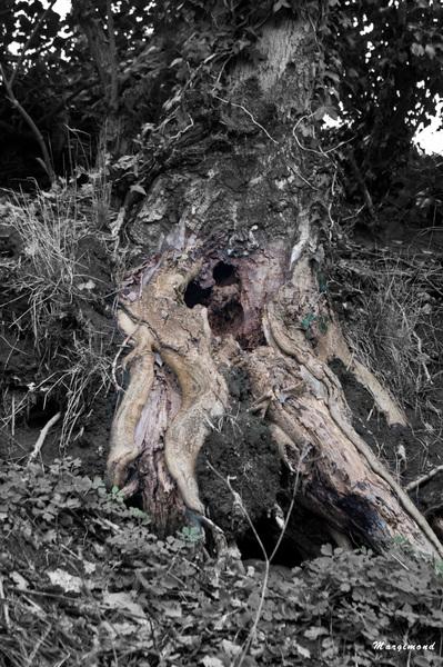 L'arbre a l'odeur de la terre
