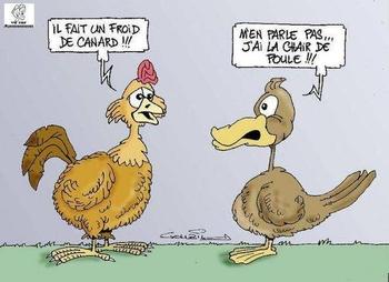 Poule-Canard