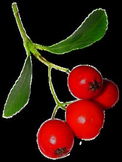 Nature, feuilles, fleurs, arbres, fruits d'automne (Automne)