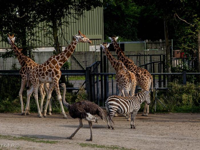 Cartes postales-2 (le zoo de Dublin )