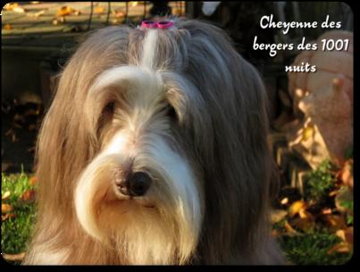 ♥ Cheyenne♥  Automne 2020
