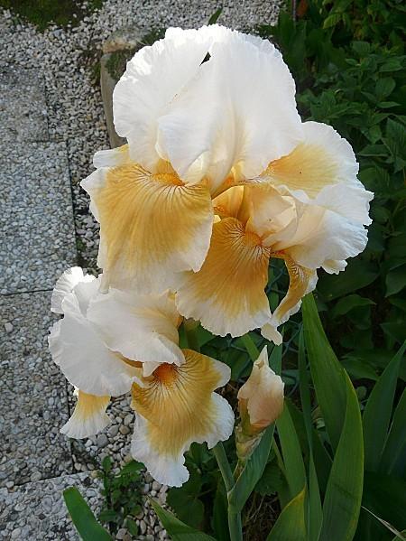 Peach-Spot--23--05-2010-012.jpg