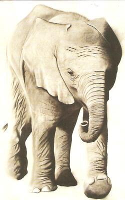 mon premier éléphant