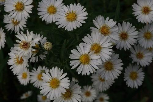 Les étoiles du jardin