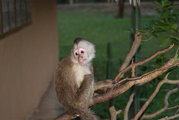 adorable petit singe