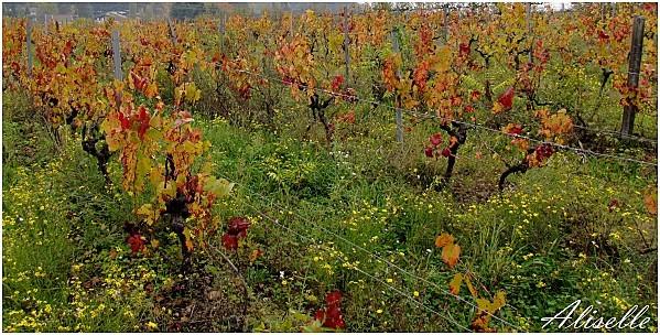 Couleurs-d-automne-octobre-2011--1.jpg