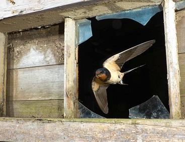 Les oiseaux en vedettes ...