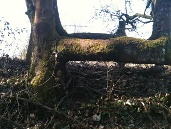 nature_de_mars 006