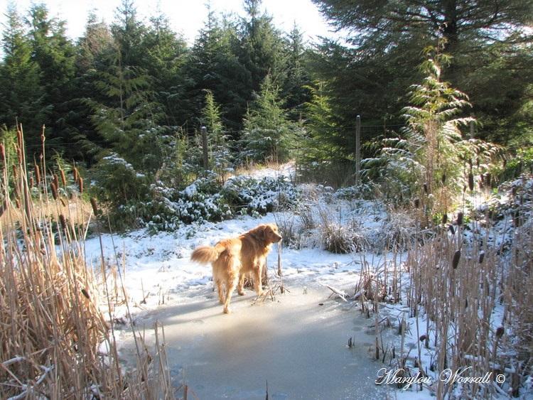 Nouvelles du Canada 162 : Kuali aime la neige