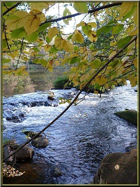 eau pls arbres