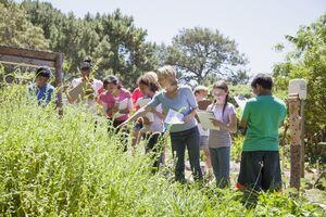 books people class field wildflowers