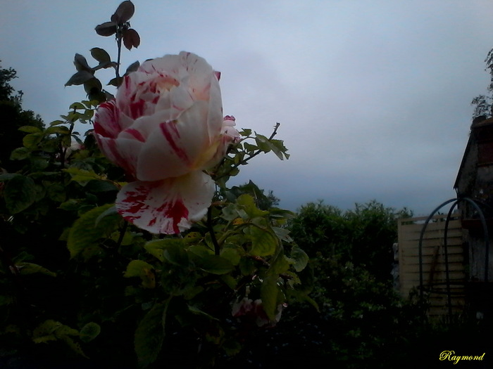 Dernieres floraisons.