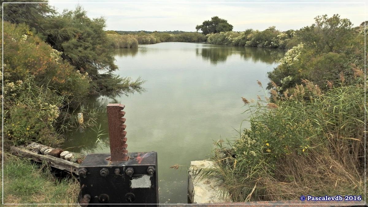 Plaines du Teich et domaine de Fleury - Octobre 2016 - 3/13