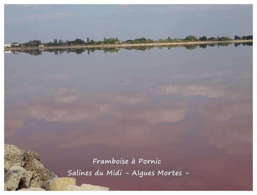 Salins du midi - Aigues Mortes - Camargue
