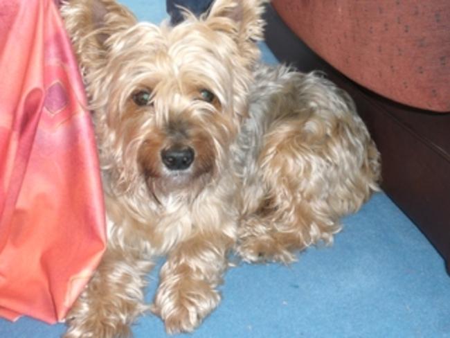 Berny - le chien autrichien