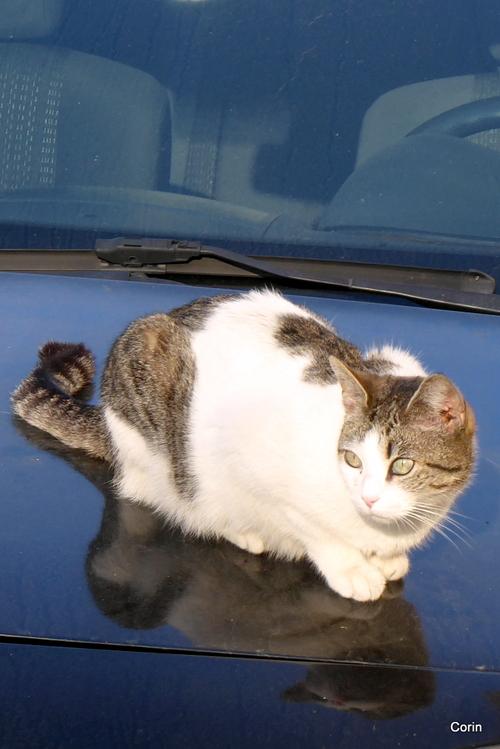 La chatte de mon voisin...