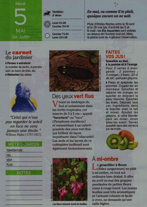 ♥Jolis colibris♥