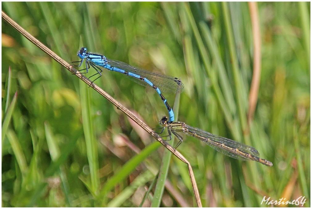 Insectes-04-7153b.jpg